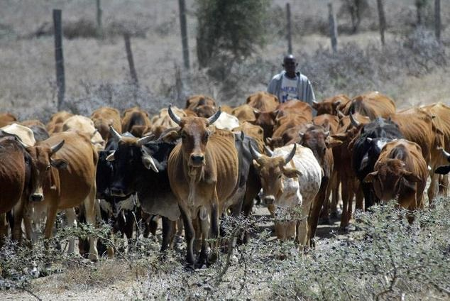 Police launch manhunt for cattle rustlers on 'Most Wanted' list