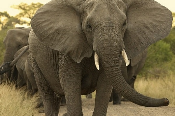 Bulawayo Man Killed By Elephant In Game Park
