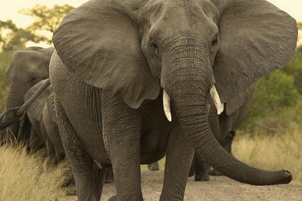 Bulawayo Man Killed By Elephant In Game Park